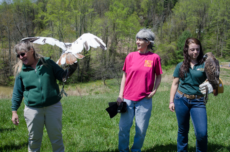 red-tailed hawks at penland school