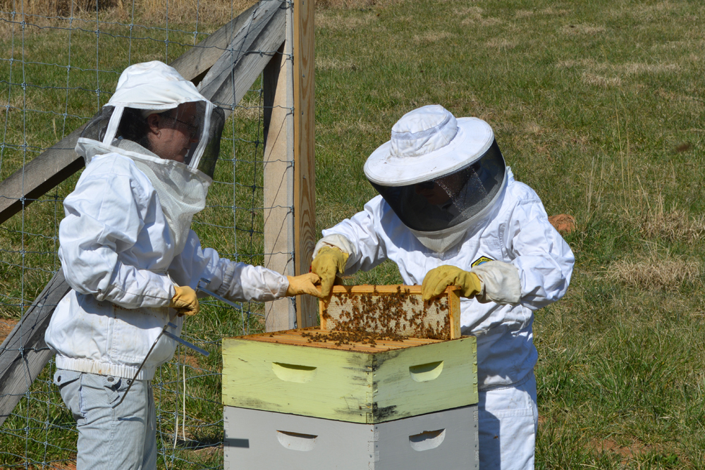 inspecting a frame in a beehive