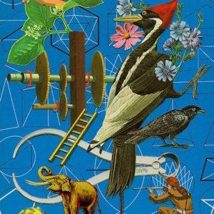 lemanski_woodpecker
