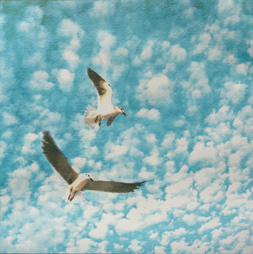 photo print of two seagulls against a sky of small, puffy clouds