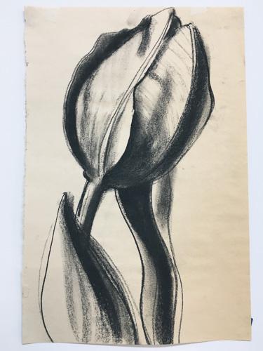 drawing by alice ballard